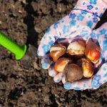 Garden care September
