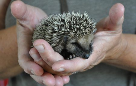 How many of us love the cute little faces of our native hedgehogs? In turn, how many people would be more than just a little upset to find out that the numbers of hedgehogs in the UK are rapidly declining. This really is bad news for us all. Not only are they absolutely gorgeous, but […]