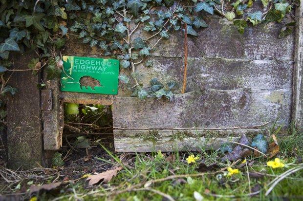 How To Make Your Garden A Hedgehog Haven Garden