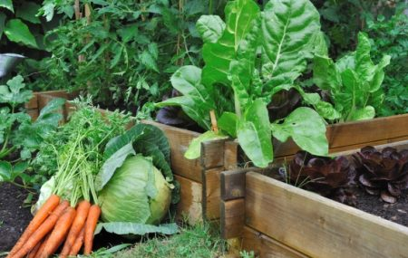 Making a raised veggie bed for your garden The winter means that you spend less time in your garden. However, it doesn't have to mean that you think less about how to make the most of your outdoor space. In fact, the cold weather can mean that you take on some DIY projects that will […]