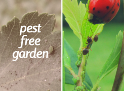 Pest free garden: how to keep your garden save and secure.