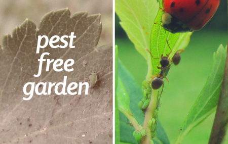 Pest free garden: how to keep your garden save and secure. If you love your garden, then chances are that you will spend lots of times cultivating and tending to it. The last thing you will want is to discover that you have a pest problem. Pests come in a variety of shapes, sizes and […]